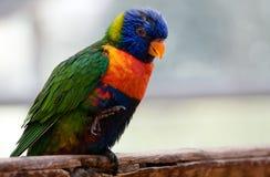 Uccello variopinto fotografia stock libera da diritti
