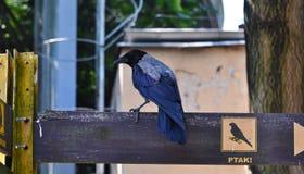 Uccello variopinto che si siede sul segno che dirige verso il pavilio degli uccelli fotografie stock libere da diritti