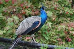 Uccello variopinto sul recinto fotografie stock libere da diritti