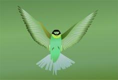 Uccello verde Fotografia Stock Libera da Diritti