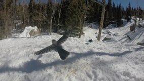 Uccello in volo Fotografie Stock