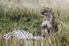 Uccisione del leone Fotografia Stock Libera da Diritti