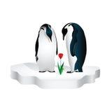 Uces par de pingüinos libre illustration