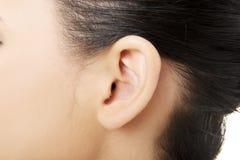 Ucho zdjęcie stock