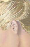 ucho Obraz Stock
