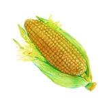 Ucho kukurudza pojedynczy białe tło Akwareli illustrati ilustracji
