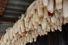 Ucho kukurudza Sa Pa Wietnam Fotografia Royalty Free