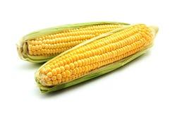 Ucho kukurydza Zdjęcie Stock
