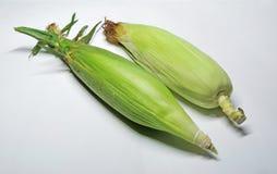 2 ucho kukurydzanego Obraz Stock