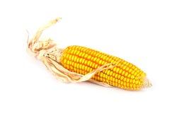 Ucho odizolowywający kukurudza Obraz Royalty Free