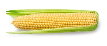 Ucho odizolowywający na bielu kukurudza Obraz Royalty Free
