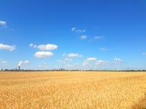 Ucho złoty pszeniczny pole z siła wiatru obrazy stock