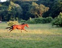 uciekać Zdjęcie Royalty Free