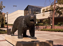 UCLA Bruin. This is a statue of the UCLA Bruin from the University of California at Los Angeles - a large public university - with the Wooden Center in the Royalty Free Stock Image