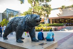 UCLA Bruin Bear. Los Angeles, CA: October 20, 2017: Bruin Bear on the UCLA campus. UCLA is a public university Royalty Free Stock Images