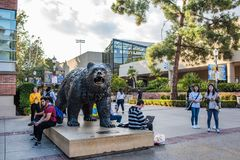 UCLA Bruin Bear. Los Angeles, CA: October 20, 2017: Bruin Bear on the UCLA campus. UCLA is a public university Royalty Free Stock Photos