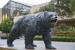 UCLA Bruin Statue. Westwood, JUN 21: UCLA Bruin Statue on JUN 21, 2017 at Westwood, Los Angeles County, California, United States Royalty Free Stock Photo