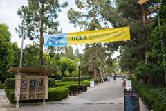 UCLA campus. Los Angeles, CA: May 7, 2017: Bruin Walk on the UCLA campus. UCLA is a public university in the Los Angeles area Stock Photo
