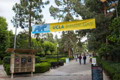 UCLA campus. Los Angeles, CA: May 7, 2017: Bruin Walk on the UCLA campus. UCLA is a public university in the Los Angeles area Stock Image