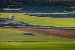 Ucles Cuenca landskap, Castilla La Mancha, Spanien Arkivbild