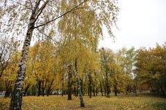 Ucrânia Kiev Kyiv Autumn Park 2016 fotografia de stock
