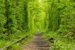 ucrânia Túnel do amor Foto de Stock Royalty Free