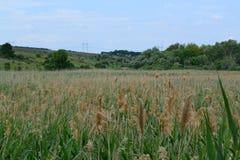 Ucrainian-Landschaft lizenzfreie stockfotos