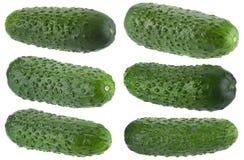 Ucumber ¡ Ð на белом собрании Стоковые Изображения