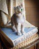 Uczący się chwyta mysz, pojęcie skład Zdjęcia Royalty Free