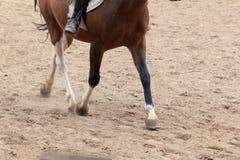 Uczenie Horseback jazda Instruktor uczy nastoletniego Equestrian fotografia stock