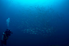 Uczyć kogoś Barracuda sylwetkę Obrazy Royalty Free