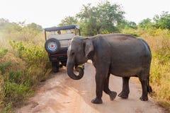 UDA WALAWE, SRI LANKA - JULI 14, 2016: Van de olifantselephas van Srilankan maximusmaximus en een safarivoertuig in Uda Walawe royalty-vrije stock fotografie