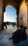 Udaipur royalty free stock image