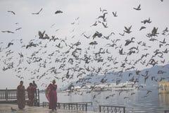 UDAIPUR INDIA, WRZESIEŃ, - 15, 2017: Jeziorny Pichola z miastem Pala Obraz Royalty Free