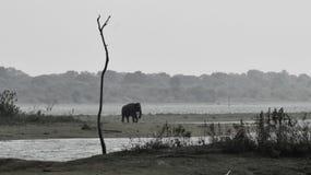 Udawalawa national parck. Udawalawa Srilanka at 4.30 pm an willd life Stock Image