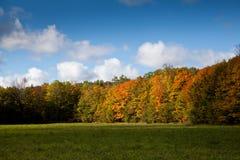 Udde Croker Woodside Autumn Fall Forest Trees Arkivfoto