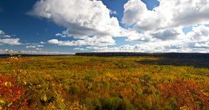 UddeCroker Cliff Autumn Fall Forest Trees landskap Fotografering för Bildbyråer