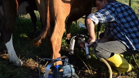 Udder nipples milking. Man puts cows udder nipples in a modern new lightweight portable milking mechanism circa June 2013 in Limonys stock video footage