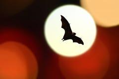 Uderza sylwetki z kolorowym oświetleniem - Halloweenowy festiwal Fotografia Stock