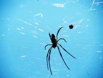 Uderzenia Krachao pająka ogród tajlandzki Zdjęcie Stock