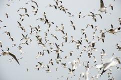 Uderzenie Poo, Tajlandia: Mrowie Seagull latanie. fotografia royalty free
