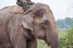Udomowiający słoń w Nepal obrazy royalty free