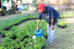 Udon Thani, Tajlandia rolników ogrodniczki nawadnia drzewa obrazy royalty free