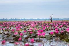 UDONTHANI, ТАИЛАНД Стоковое Фото
