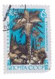 UDSSR - CIRCA 1966: Ein Stempel druckte in Shows Palmen und in CYP Lizenzfreie Stockfotos