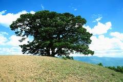 uduchawiający drzewo Fotografia Royalty Free