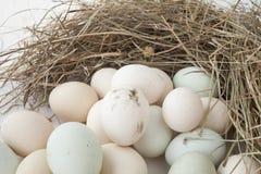 Udział jajka w wieloskładnikowych kolorach fotografia royalty free