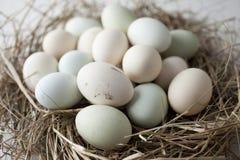 Udział jajka w wieloskładnikowych kolorach zdjęcia stock