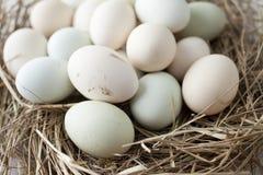Udział jajka w wieloskładnikowych kolorach obrazy royalty free