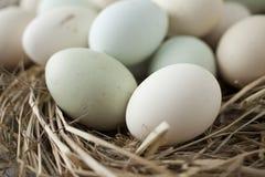 Udział jajka w wieloskładnikowych kolorach obraz stock